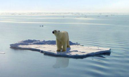 polarbear-North Pole
